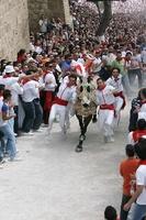 https://www.cruzdecaravaca.com/es/small/Un-caballo-pura-sangre-bate-el-record-en-la-cuesta-n5.jpg